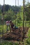 Baumfall an den Etzwiesen