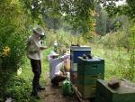 Bienen - Langzeitbehandlung gegen die Varroa-Milbe