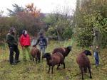Besuch bei den Schafen