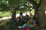 Schafschur-Event am Malchener Blütenhang