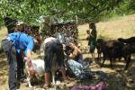 Schafschur und Picknick