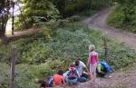 Waldwölfe am Hermelinweiher