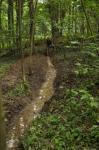 Vernässungsgräben im Erlenwald