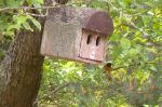 Tierbeobachtungen am Seeheimer Blütenhang